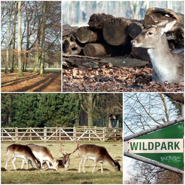 koeln_tierpark_collage2