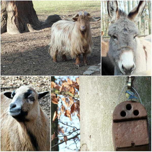 koeln_tierpark_collage3